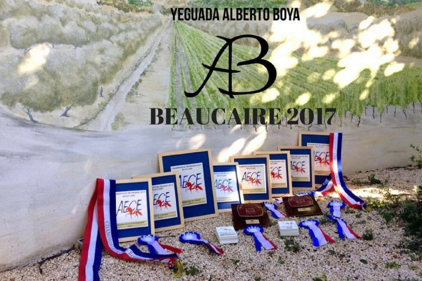 BEAUCAIRE 2017: YEGUADA ALBERTO BOYA MEJOR GANADERÍA EXPOSITORA